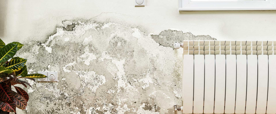 Discover the Best Way to Eliminate Mold